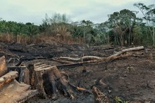Result Of The Deforestation Of The Rainforest With Burnt Down Fields And Extensive Logging