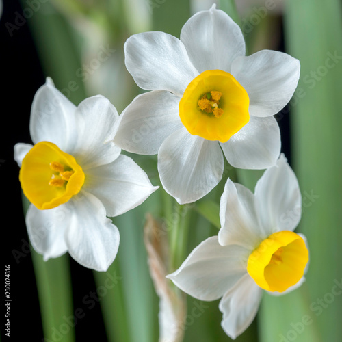 Narcissus is a beautiful flower.