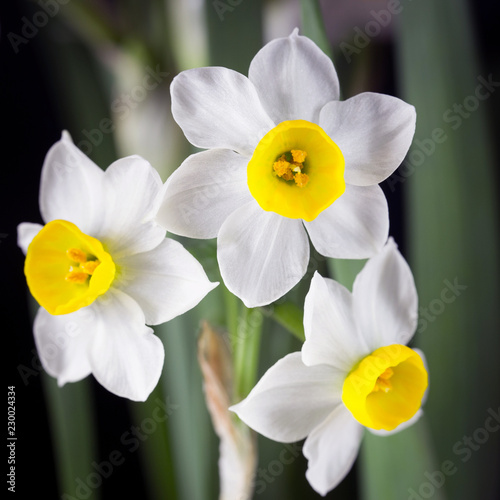 Deurstickers Narcis Narcissus is a beautiful flower.
