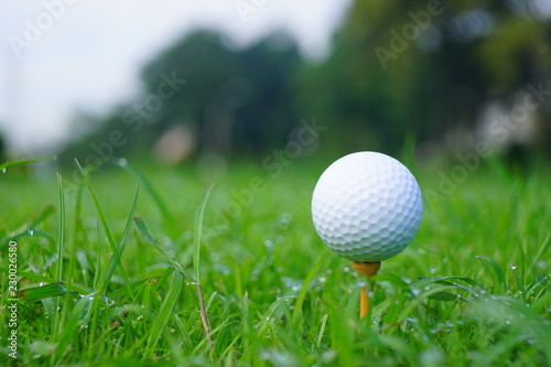 Poster Golf Golf ball and tee with gold course background ready to tee off