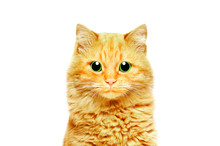 Portrait Of A Beautiful Ginger Cat With Green Eyes, Closeup, Isolated On White Background