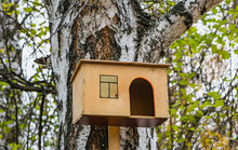 A New Yellow Bird And Squirrel Feeder House From Plywood Is Hanging On A White Old Birch Tree