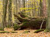 Jesienny pejzaż w rezerwacie prastarej puszczy