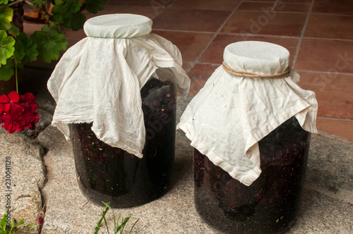 Large glass jars with sugar soaked sour cherries and alcohol fermentation for making homemade liqueur closeup on house backyard