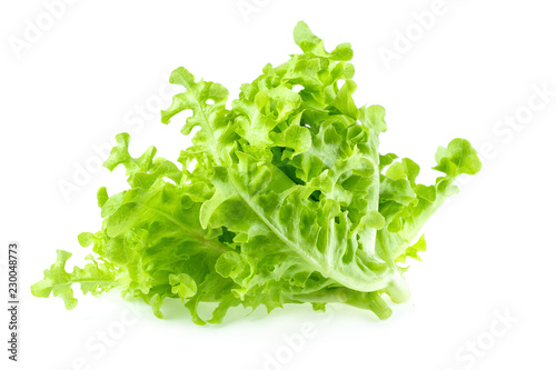 Green oak leaf lettuce isolated on white background