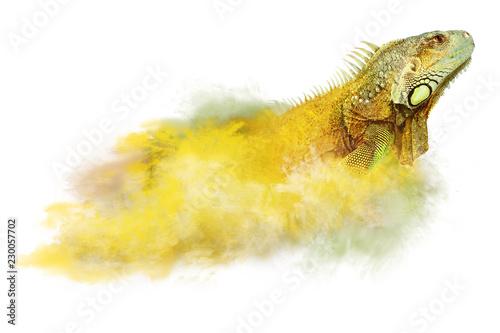 portrait of big iguana and fog  isolated on white background