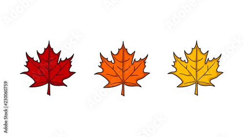 Fotografia Maple leaf
