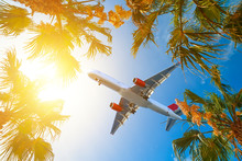 Aircraft Approaching On Final Over Tropical Island. Palm Tree Crowns With Green Leaves On Sunny Sky Background. Coco Palm Tree Tops - View From The Ground.