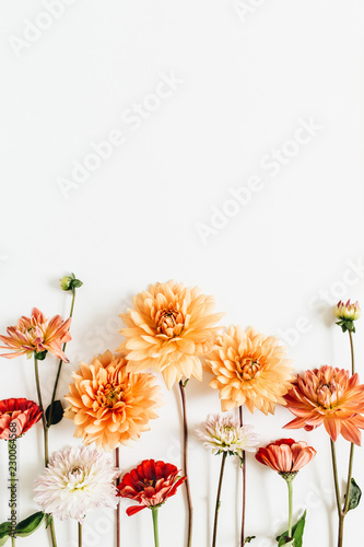 Poster de jardin Dahlia Colorful dahlia and cynicism flowers on white background. Flat lay, top view.