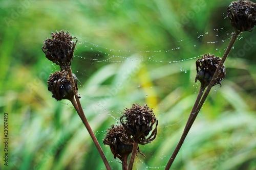 autumn jesień sieć pająk