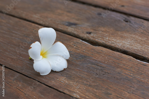 Foto op Canvas Frangipani A plumeria alba on the wooden ground