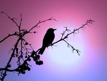 Bird At The Sunset