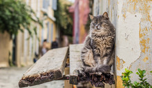 Funny Scene With Street Fluffy Cat Animal Portrait Who Try To Sleep Sit On Outdoor Exterior Wooden Shelf Near Wall