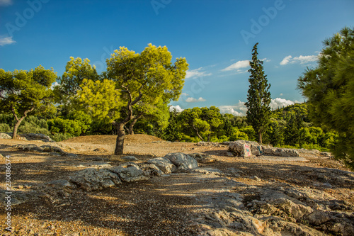Spoed Foto op Canvas Blauwe jeans nature scenic south tropic hill forest landscape with vivid trees on rocks in summer warm weather bright day time