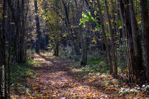 natural tourist trail in woods in late autumn