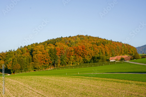 landscape fam in autumn in front of a forest
