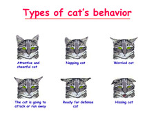 Type Of  Cats Behavior Isolate...