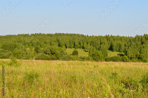 Spoed Foto op Canvas Honing landscape with green field and blue sky