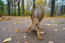 Cheerful Squirrel Plays