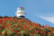 canvas print picture - Lighthouse and flowers