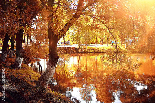 Valokuva autumn forest landscape / yellow forest, trees and leaves October landscape in t