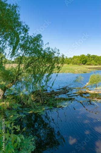 Fotografie, Obraz  Willow Boughs Over Marsh
