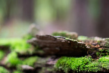 Abstract Woodland Background With Green Moss A Decaying Log ~WOODLAND~