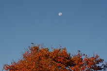 Morning Moon With An Autumn Fa...