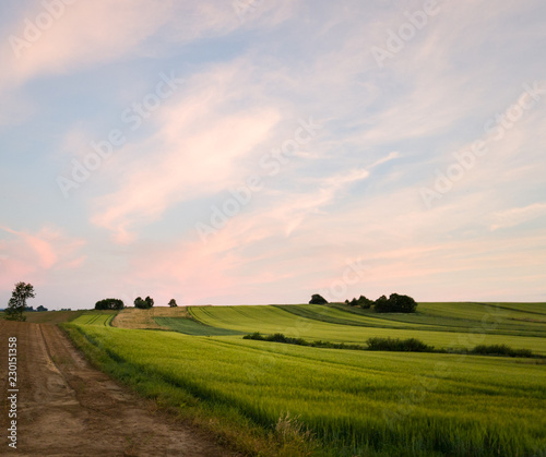 Fotobehang Wit Summer sunset with wheat fields