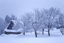 Bare Winter Trees In Deep Snow...