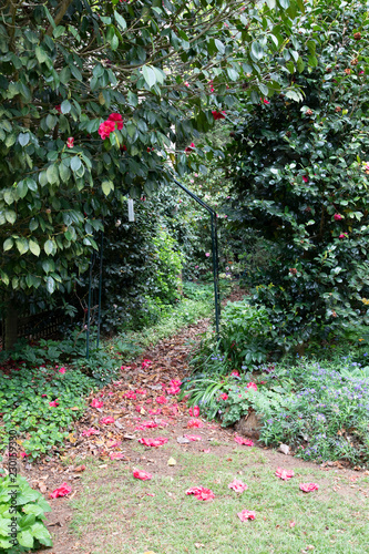 Photo  Garden natural pathway with rose petals