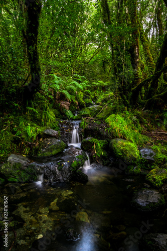Printed kitchen splashbacks Water Beautiful small waterfall and greenery nature in the rainforest.