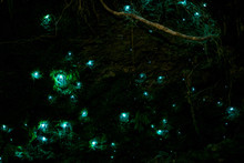 Beautiful New Zealand Glow Wor...