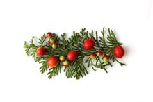 ヒノキの葉と万両とクマタケランの実のクリスマスの飾り