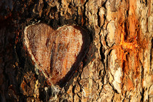 Photo Of Old Tree Trunk With Heart Carved On It. Valentine's Day Concept. Romantic Background.