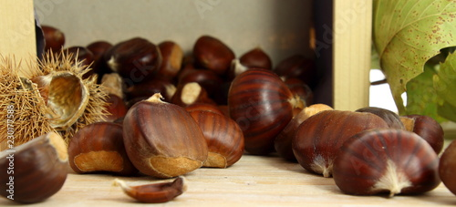 Sweet chestnuts raw
