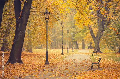 Fototapeta park colorful-tree-alley-with-row-of-lanterns-in-the-autumn-park-in-krakow-poland