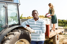African American Man Standing Near Farm Tractor In Vineyard, Harvesting Grapes