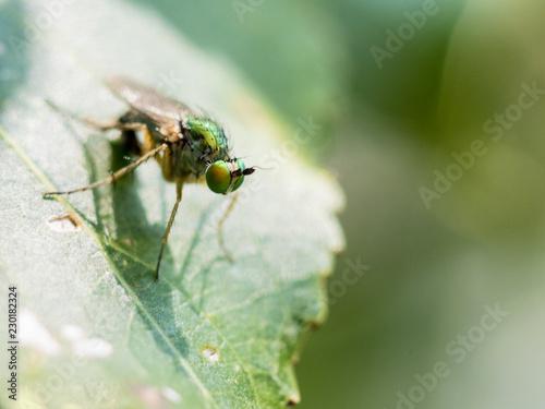 Fotografía  msoca de ojos verde en la hoja