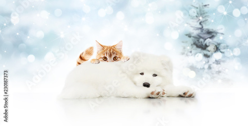 Foto  merry christmas signboard or gift card for pet shop, white dog and ginger cat pe