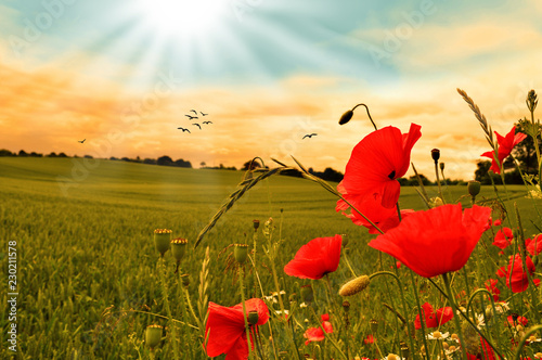 Mohnfeld Mohnblumen mit Sonnenuntergang und Vögeln
