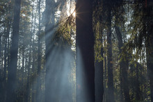 Smoke In The Forest / Sun Rays In The Forest
