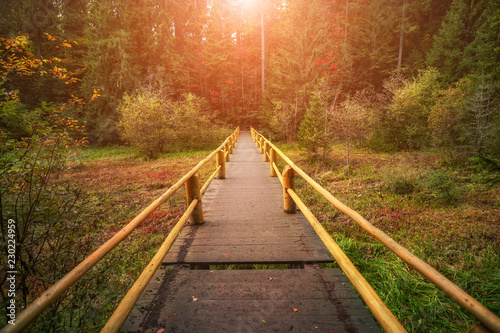 obraz PCV wooden bridge in sunny autumn forest. natural background