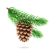 Realistic Pine Cone At Fir Tre...