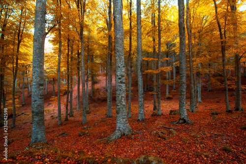 Recess Fitting Magenta autumn in the forest