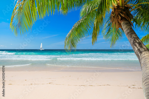 Foto op Plexiglas Caraïben Untouched sunny beach with palm and a sailing boat in the turquoise Caribbean sea on Jamaica Caribbean island.