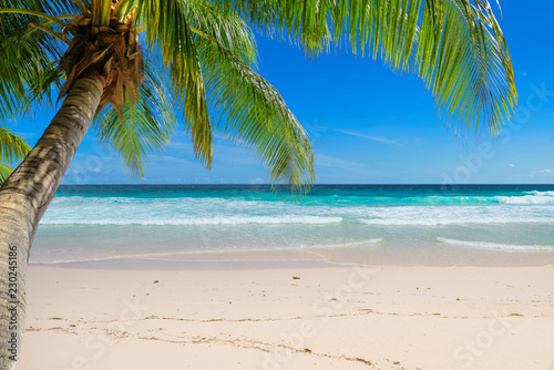 Foto auf AluDibond Lateinamerikanisches Land Vacation sandy beach with palm and turquoise sea. Summer vacation and tropical beach concept.