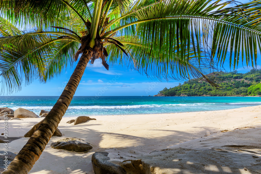 Fototapeta Tropical Beach. Sandy beach with palm and turquoise sea. Summer vacation and tropical beach concept.