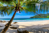 Fototapeta  - Tropical Beach. Sandy beach with palm and turquoise sea. Summer vacation and tropical beach concept.