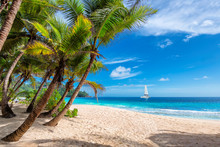 Exotic Sunny Beach With Palm And A Sailing Boat In The Turquoise Sea On Hawaii Paradise Islands. Summer Vacation And Tropical Beach Concept.